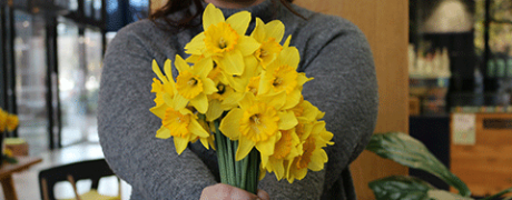 Daffodil Day Appeal